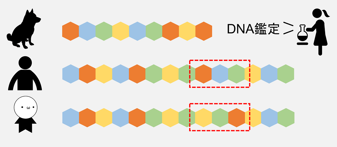同じヒト同士でもわずかにDNAのパーツの並び方が違い、DNAではこれを利用して人物の同定を行います。
