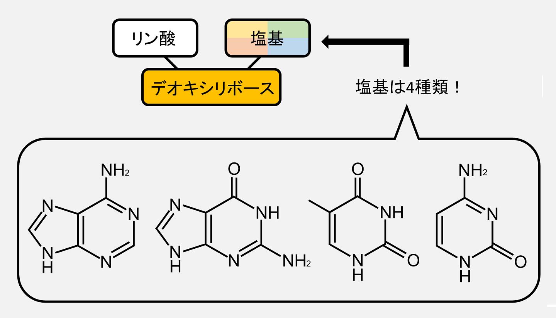 デオキシリボヌクレオチドに含まれる塩基の化学式です。