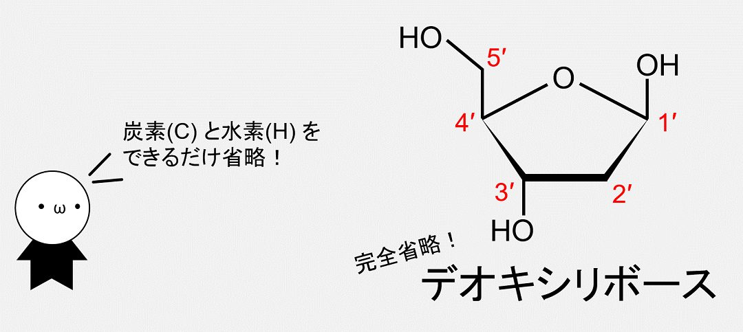 デオキシリボースの炭素・水素表記をできるだけ省略した化学式です。