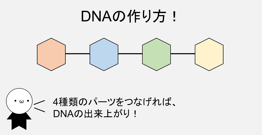 DNAは4種類のパーツが連結してできたものです。