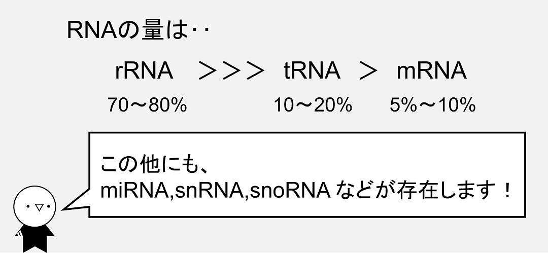 RNAの中で最も含まれる量が多いのはリボソームRNAです。